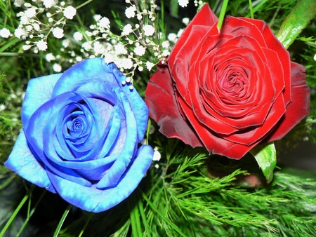 3D red and blue rose popup card